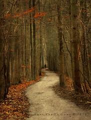 the pathless path photo by larsvandegoor.com