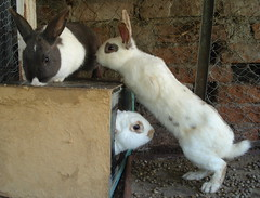Three Bunnies photo by Sërch