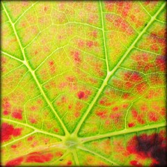 New City Map of Paris ? - Microworld in the Vineyard, Germany photo by Batikart