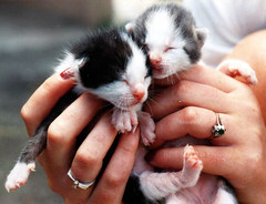 baby cats photo by smokykater - 285k+ views