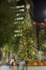 Xmas Tree Sydney 2008