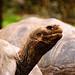 Ecuador and Galapagos-2135 © Bart Plessers