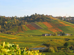Colourful Vineyards Quilt - Fall Landscape in Germany photo by Batikart