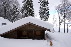 Forsthütte Bärenleger