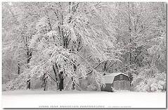 Snowy Woods of Erie Pennsylvania 2008 photo by :: Igor Borisenko Photography ::