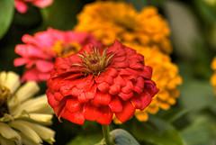 flores-11.jpg