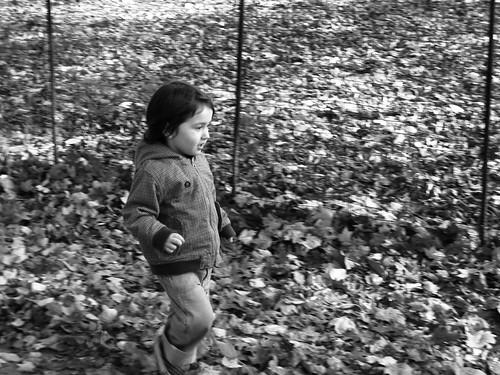 Prospect Park Nov. 9