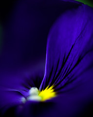 Who ever decide blue was a sad color obviously didn't spend enough time around flowers photo by Zeb Andrews