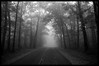 The Foggy Road.