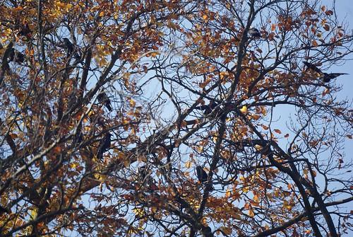 Autumn 137