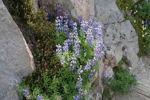 spring on the mountain = wild flowers