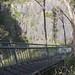 Aspley Falls