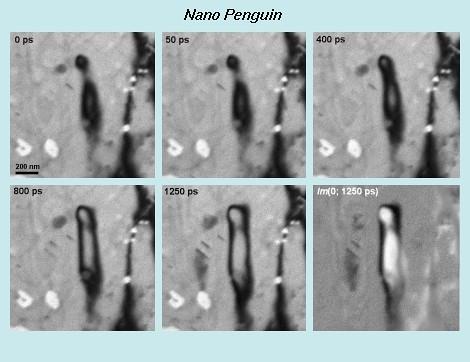 NanoPenguin