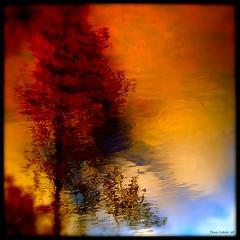 Le mélèze de ciel...!!! by Denis Collette...!!!