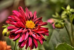 flores-10.jpg