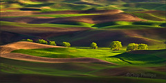 Row of Trees, Palouse photo by Chip Phillips