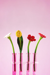 Test tube flowers photo by cgines