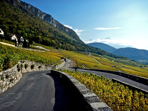 Vineyards near Aigle