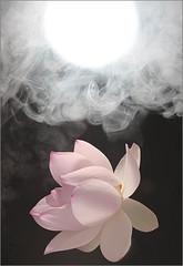 Lotus Flower IMG_0471 photo by Bahman Farzad