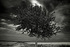 Photo 'The Lonely Tree' by Pascal Hertleif