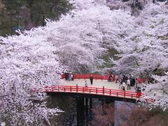 弘前城(さくら祭り) (31)