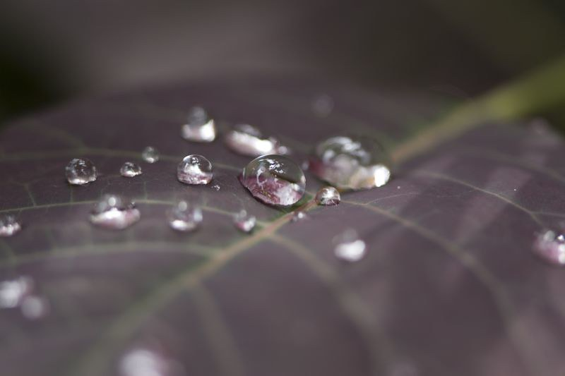 Water Droplets photo by Meerkat Thunderpants
