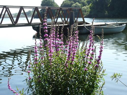 Queens Valley Reservoir