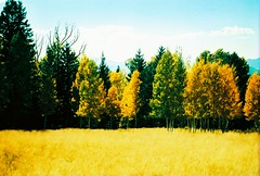 Kodak Ektachrome autumn photo by kevin dooley