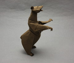 Grizzly Bear photo by Quentin Origami