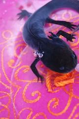 black axolotl photo by 2r0xf0x deLuXe