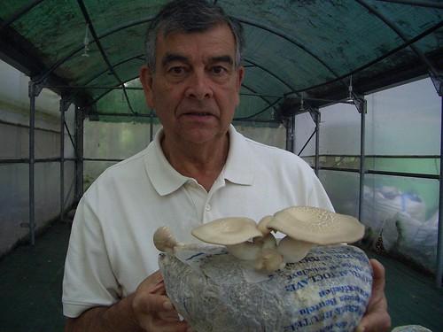 Dr. Magán y el Pleurotus eryngii