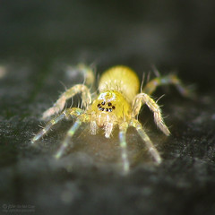 Arachtober 8th photo by jciv