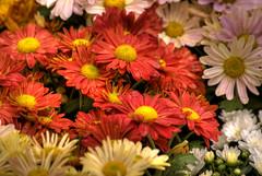 flores-4.jpg