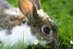 "Hase im Europapark - Bunny in the ""Europapark"" photo by em-si"