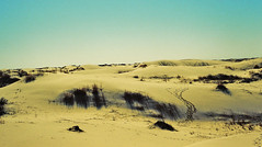 sand dunes photo by Ainsley Burke
