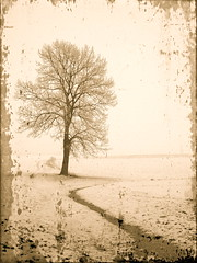 Alone, among snow, fog, frost