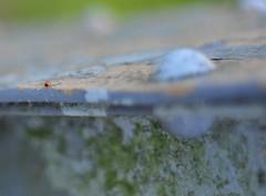 blue and rust. photo by mjkimmel