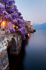 Italy - Lake Como: Wisteria Blues photo by Nomadic Vision Photography