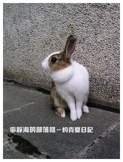 約克夏日記_20060215_我等公車