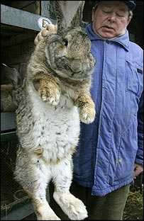 twenty pound rabbit