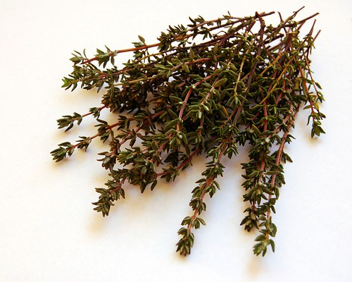 thyme© by haalo