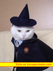 gato disfraz carnaval 20050411010DF4A