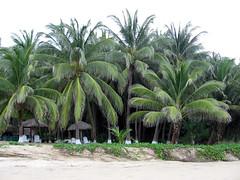 Playa Bococho 2