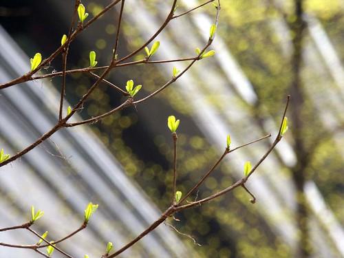 初春的嫩芽