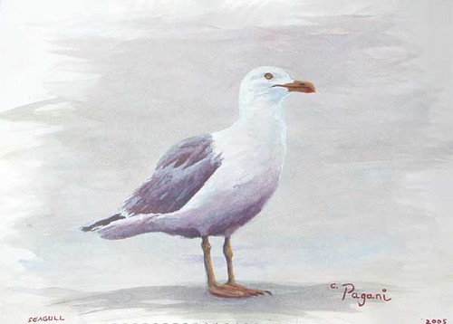 Oregon painting - The Seagull acrylic on paper by Pagani