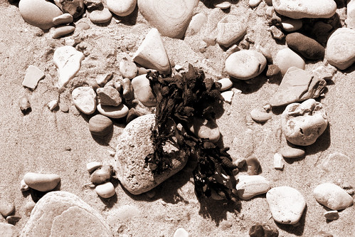 pebbles and seaweed