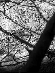 ombres sur les  murs, 19 septembre 2005