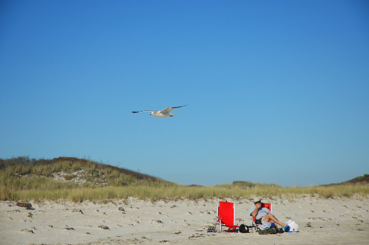 the gull and beach visitor