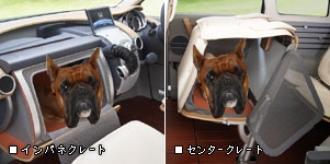 Dog Friendly Car
