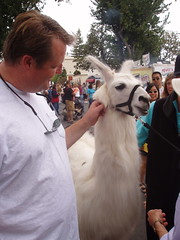 Murray and llama